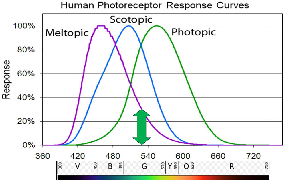Human Photoreceptor Response Curves